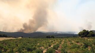 Φωτιά Ζάκυνθος: Mία προσαγωγή για την πυρκαγιά στο Αργάσι