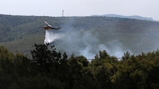 Δήμαρχος Καρύστου: Υπό έλεγχο η φωτιά στο Μετόχι Καρύστου