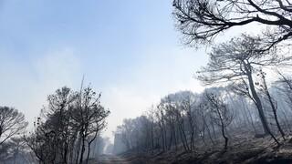 Περιπολίες από στρατό και αστυνομία σε βουνά και δάση - Σε επιφυλακή και τα εναέρια μέσα