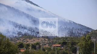 Φωτιά στα Βίλια: Συναγερμός στην Πυροσβεστική - Ισχυροί άνεμοι στην περιοχή