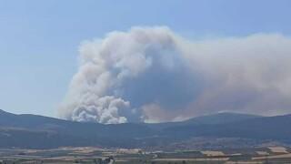 Νέα φωτιά στα Βίλια: Εκκενώθηκαν προληπτικά δύο οικισμοί