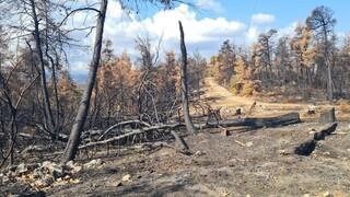 Φωτιές σε Εύβοια και Βαρυμπόμπη: Καθαρίζονται τα καμένα - Ξεκίνησαν τα αντιπλημμυρικά