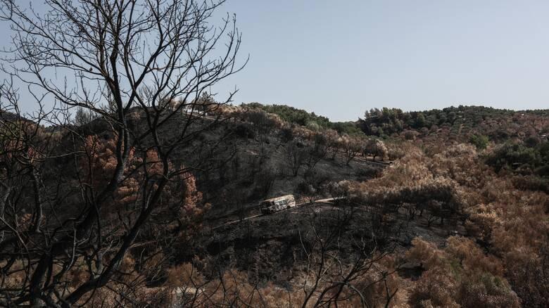 Κάλυψη ασφαλιστικών εισφορών εργαζομένων σε πυρόπληκτες περιοχές της Β. Εύβοιας