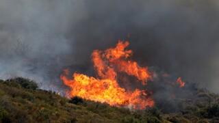 Φωτιά Φθιώτιδα: Φλόγες «πολιορκούν» τα πρώτα σπίτια στο Λογγίτσι