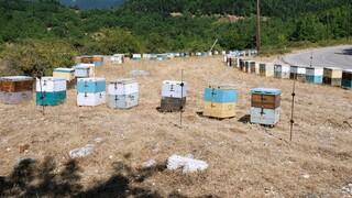 Φωτιές: Χάθηκαν 9.000 μελισσοσμήνη και το 65% του πευκόμελου στην Εύβοια