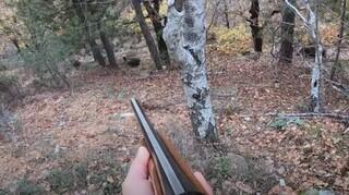 Πεντέλη: Αντιδράσεις από τιςφιλοζωικές ενώσεις για το κυνήγι αγριόχοιρων