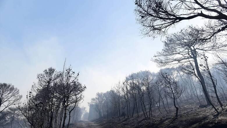 Πολύ υψηλός κίνδυνος πυρκαγιάς και αύριο για τρεις Περιφέρειες