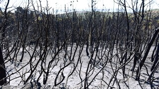 ΕΚΠΑ: «Καμπανάκι» για πλημμύρες μετά τις πυρκαγιές στην Αττική