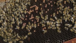 Φωτιές στην Τουρκία - DW: Οι μελισσοκόμοι καταστρέφονται - Η κλιματική αλλαγή «είναι εδώ»