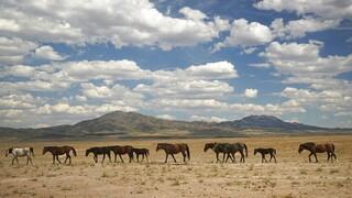Διεθνής Ένωση Προστασίας της Φύσης: Σχεδόν το 30% των ειδών που μελετήθηκαν απειλούνται