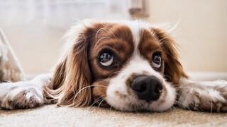 Ζώα συντροφιάς: Στείρωση ή αποστολή DNA προβλέπει το νέο νομοσχέδιο