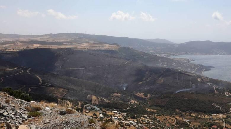 Καθαρισμός δασών: «Η κυβέρνηση υπεύθυνη για σπατάλη δεκάδων εκατομμυρίων με αποκρυφθείσες συμβάσεις»