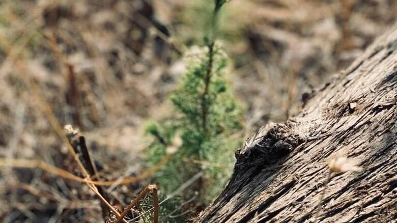 Στήριξη L'Oreal Ηellas στον οργανισμό We4All για περιβαλλοντική αποκατάσταση σε πυρόπληκτες περιοχές