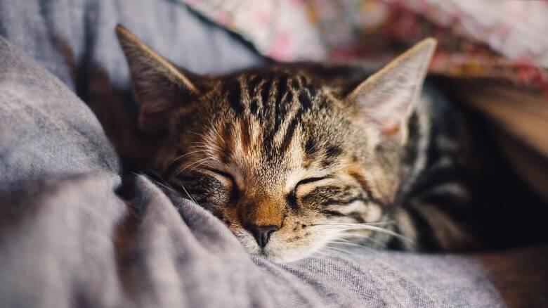 Προστασία των ζώων συντροφιάς: Η ανάρτηση του Μητσοτάκη στο Facebook
