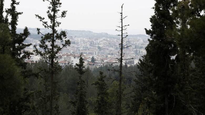 ΣτΕ: Συνταγματικός ο πυρήνας του νέου συστήματος που καθορίζει τους δασικούς χάρτες της χώρας