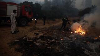 Σε ύφεση η φωτιά στη Μεγαλόπολη - Με εγκαύματα στο νοσοκομείο ο αντιδήμαρχος