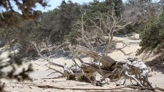 Κρήτη: Είχαν κρύψει σε παραλία του Ηρακλείου ένα κιλό ηρωίνη - Μία σύλληψη