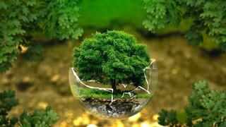 Με εξαφάνιση κινδυνεύει το 30% των ειδών δέντρων του πλανήτη