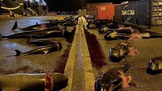 Σοκαριστικές εικόνες από τα νησιά Φερόε: Σφαγιάστηκαν 52 δελφίνια