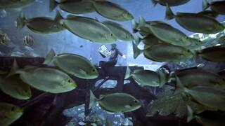 Ecoscope: Η online εφαρμογή του ΑΠΘ για την παρατήρηση των θαλάσσιων οικοσυστημάτων
