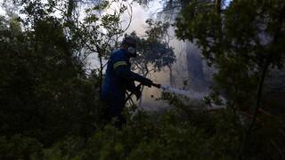 Φωτιά στο Κιλκίς: Συνεχίζεται η επιχείρηση κατάσβεσης