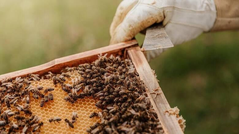 Βόρεια Εύβοια: Ο Όμιλος Ηρακλής στηρίζει τη βιώσιμη ανάκαμψη της μελισσοκομίας
