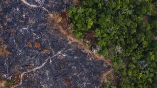 Βραζιλία: Μειώθηκαν οι πυρκαγιές στον Αμαζόνιο - Κίνδυνος ακραίου καύσωνα το 2100 λόγω αποψίλωσης