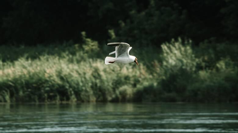 Τουρισμός στη φύση: Ανακαλύπτουμε τις καλύτερες ευρωπαϊκές χώρες για φυσιολάτρες