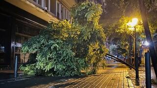 Κακοκαιρία «Αθηνά»: Οι ισχυροί άνεμοι ξερίζωσαν δέντρα στη Θεσσαλονίκη