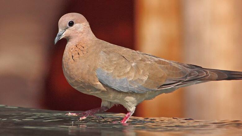 Μυτιλήνη: Ανακαλύφθηκε ένα νέο για την Ελλάδα αναπαραγόμενο είδος πουλιού