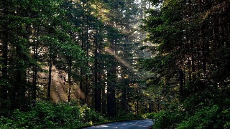 Κλίμα: Δεν διαφαίνεται στον ορίζοντα το τέλος της αποψίλωσης των δασών