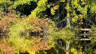 Έρευνα: Όσο περισσότερο πράσινο έχει μία περιοχή τόσα λιγότερα είναι τα κρούσματα κορωνοϊού