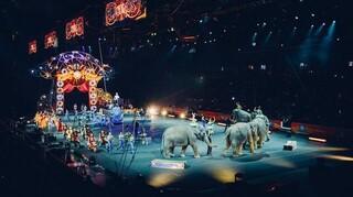 Ρωσία: Αρκούδα επιτέθηκε σε έγκυο θηριοδαμαστή σε τσίρκο