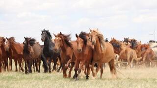 Πότε εξημερώθηκαν τα πρώτα άλογα; Νέα έρευνα δίνει εντυπωσιακά αποτελέσματα